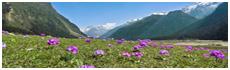 Vallée de Yumthang