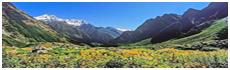 Great Himalayan