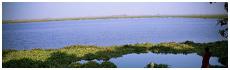 Harike Wetland
