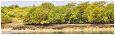 Forêts de Hara