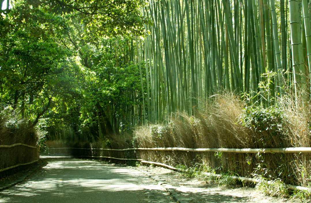 Kyoto Sagano Bamboo Forest Kansai Japan Walking Tours