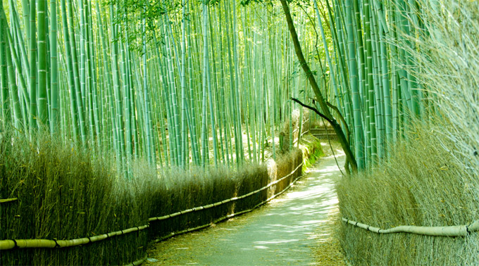 Kyoto Sagano Bamboo Forest Kansai Japan Walking Tours Kyoto