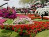 Abu Dhabi - Al Ain Paradise Garden