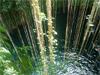 Pist� - Cenote Ik kil