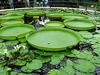 Londra - Kew Gardens