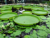 Londres - Kew Gardens
