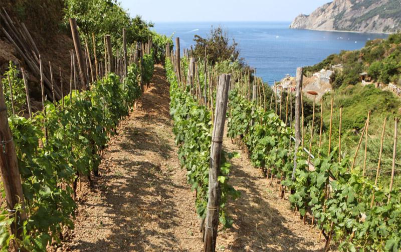 Cinque Terre I Terrazzamenti alle Cinque Terre (Liguria, Italia ...