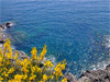 Manarola(Sp) - The Sea of Cinque Terre