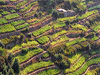 Cinque Terre(Sp) - The Terraces of the Cinque Terre