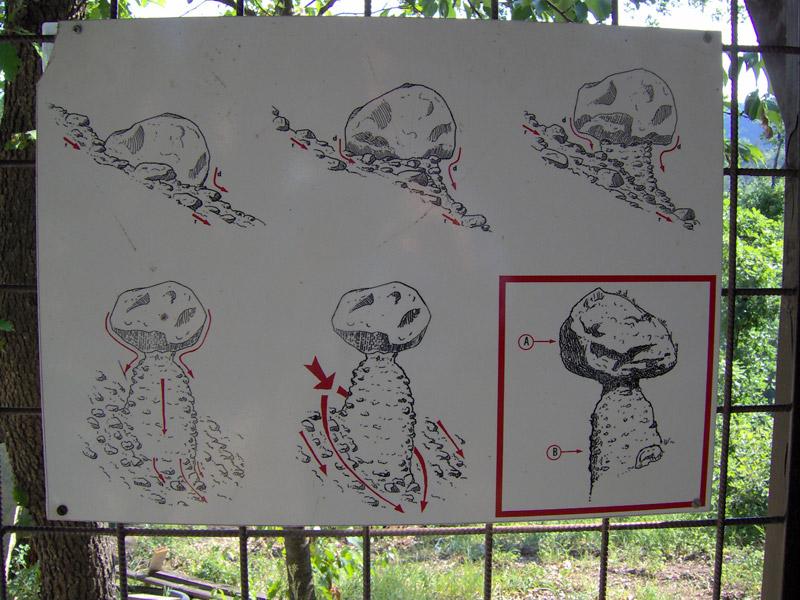 Der Pilz Piana Crixia