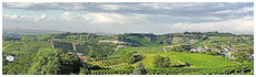 Colline del Nizza(At)