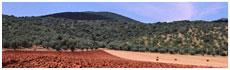 Maremma Hills(Gr)