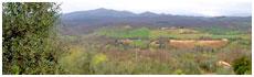 Monticiano(Si)