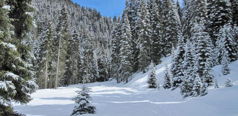 Affitto sci alpe di siusi webcam