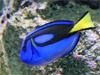 Sydney - Aquarium