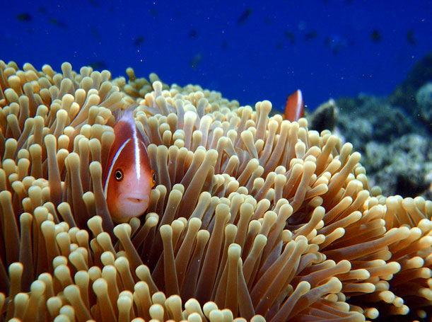 Grande barrière de corail
