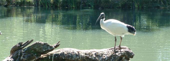 Parc de Conservation Cleland