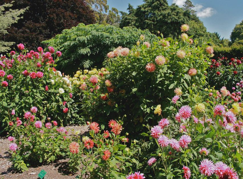 Christchurch jardin botanique nouvelle z lande la for Landscape gardeners christchurch