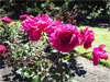 Wellington - Jardín Botánico