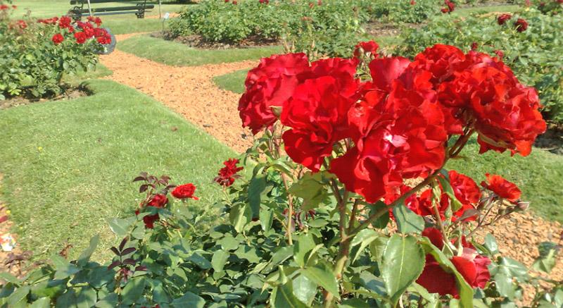 El Rosedal (Le Jardin des Roses)