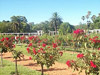 Buenos Aires - El Rosedal (Jardim das Rosas)