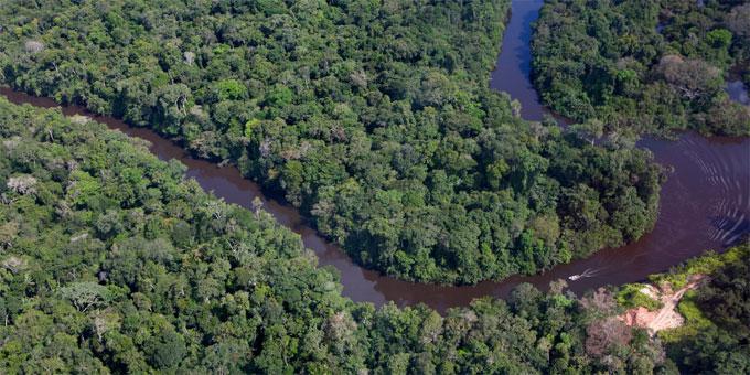 Manaus Amazon rainforest (Amazonas, Brazil)