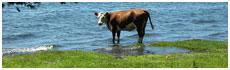 Lake Ranco