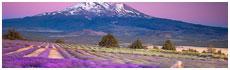 Vallée de Shasta