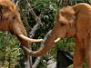 Miami - El Zoológico