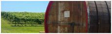 Corning Winery and Vineyard