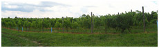 Acres of Land Winery