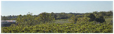 Broad Run Vineyards