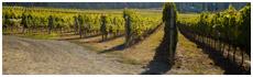 Cedar Creek Vineyards