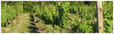 Jean Farris Winery & Bistro