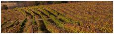 Lovers Leap Vineyard & Winery